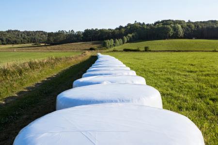 White silage bales in Brastad 9
