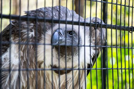 Wild vulture looks out for prey шт the zoo