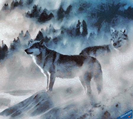 Wolf - ID: 16217-202742-9293