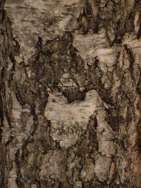 Wood Bark Texture