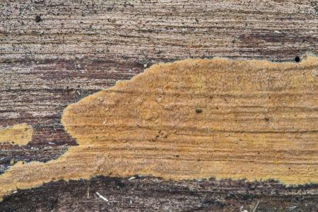 Wood crust
