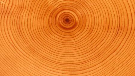 Wood swirl texture