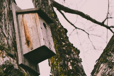 Wooden birdhouse on the trunk