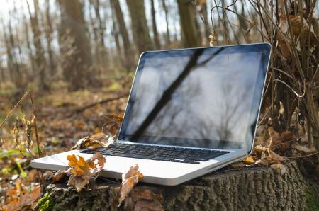 Working on laptop in forest