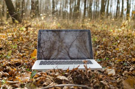 Working on Notebook in Forest
