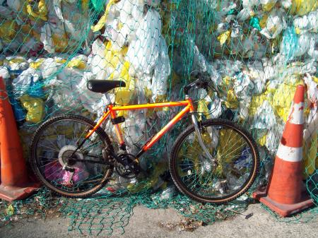 World Rider - Mountain Yak