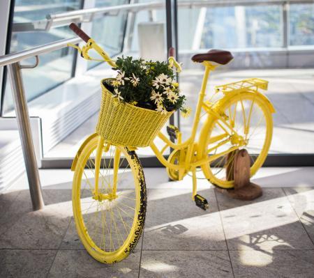 Yellow Cycle