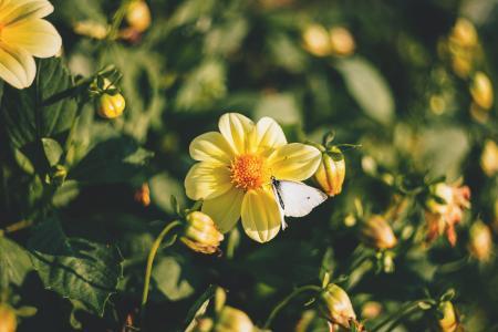 Yellow Flower Plant in Macro Shot