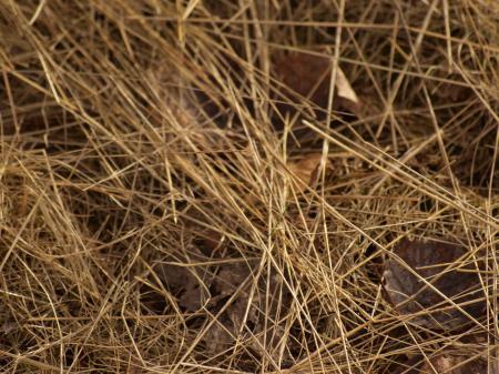 Yellow Grass Texture