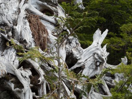 Yew lake hike at cypress --victoriaday-2015-vancouver-em10-20150518-P5180111.jpg