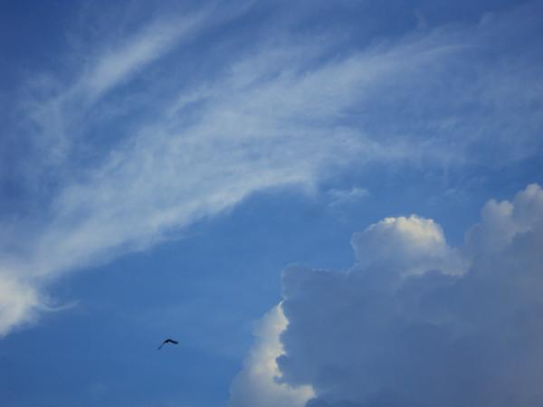 Another bird flapping its wings against the cloud