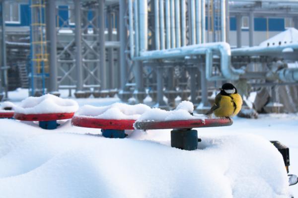 Bird on Valve in Snow