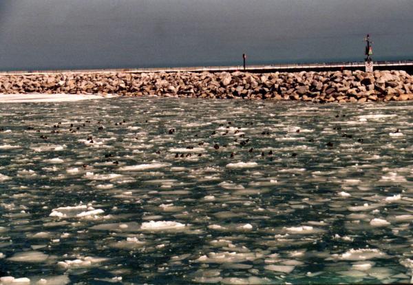 Breakwater in winter