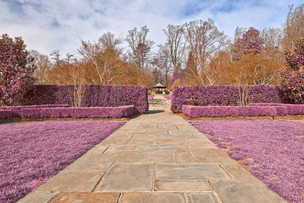 Brookside Gardens Path - Ultra Violet HD
