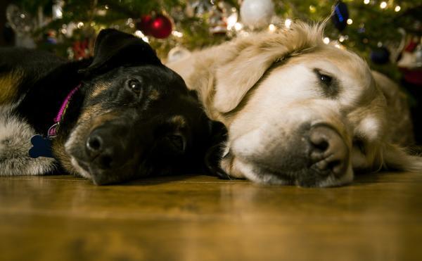 Dogs under Christmas Tree