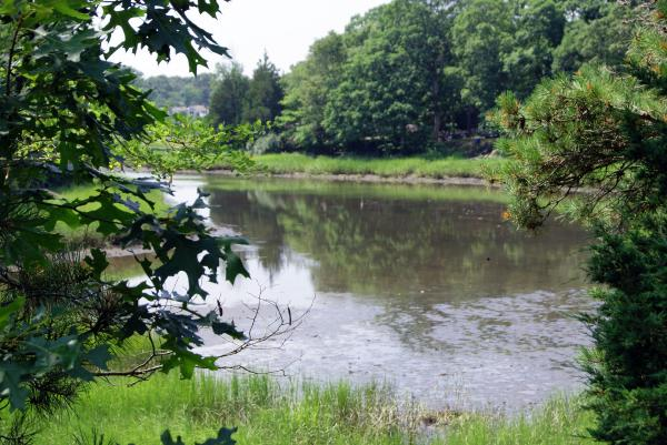 Inlet Landscape