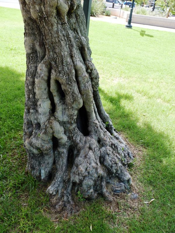 Mangled tree