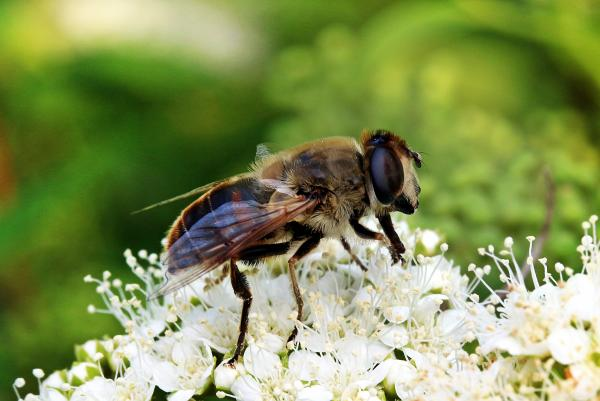 Mist Bee in the Garden