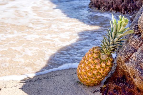 Pineapple in Seashore Leaning on Brown Rock