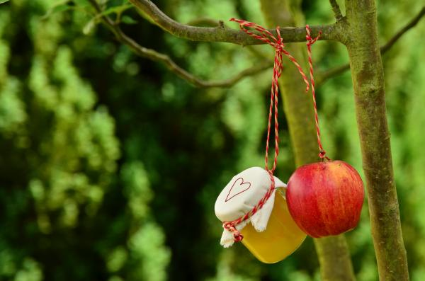 Red Apple Hanging on Tree at Daytime