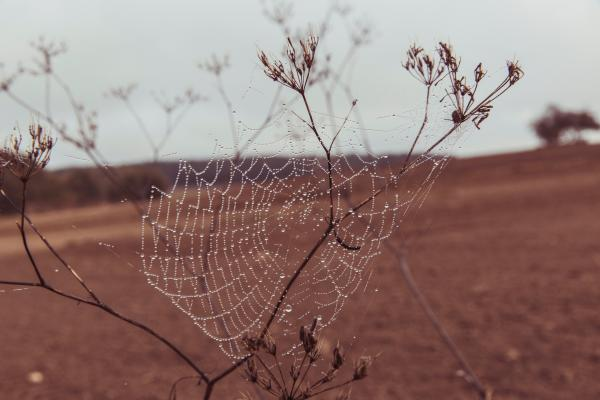 Spider Web on Plant Stem on Dry Land during Daytime Closeup Photography