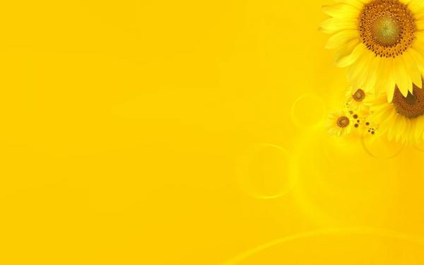 Theme on yellow