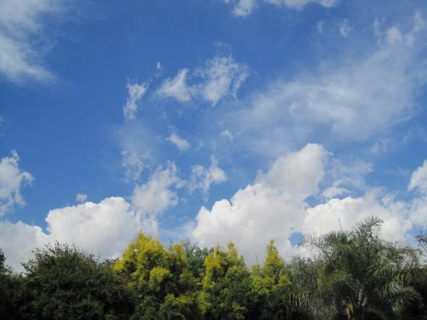 Treetops and clouds