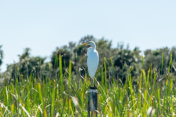 White and Yellow Bird on Pole Beside Grasses during Daytime