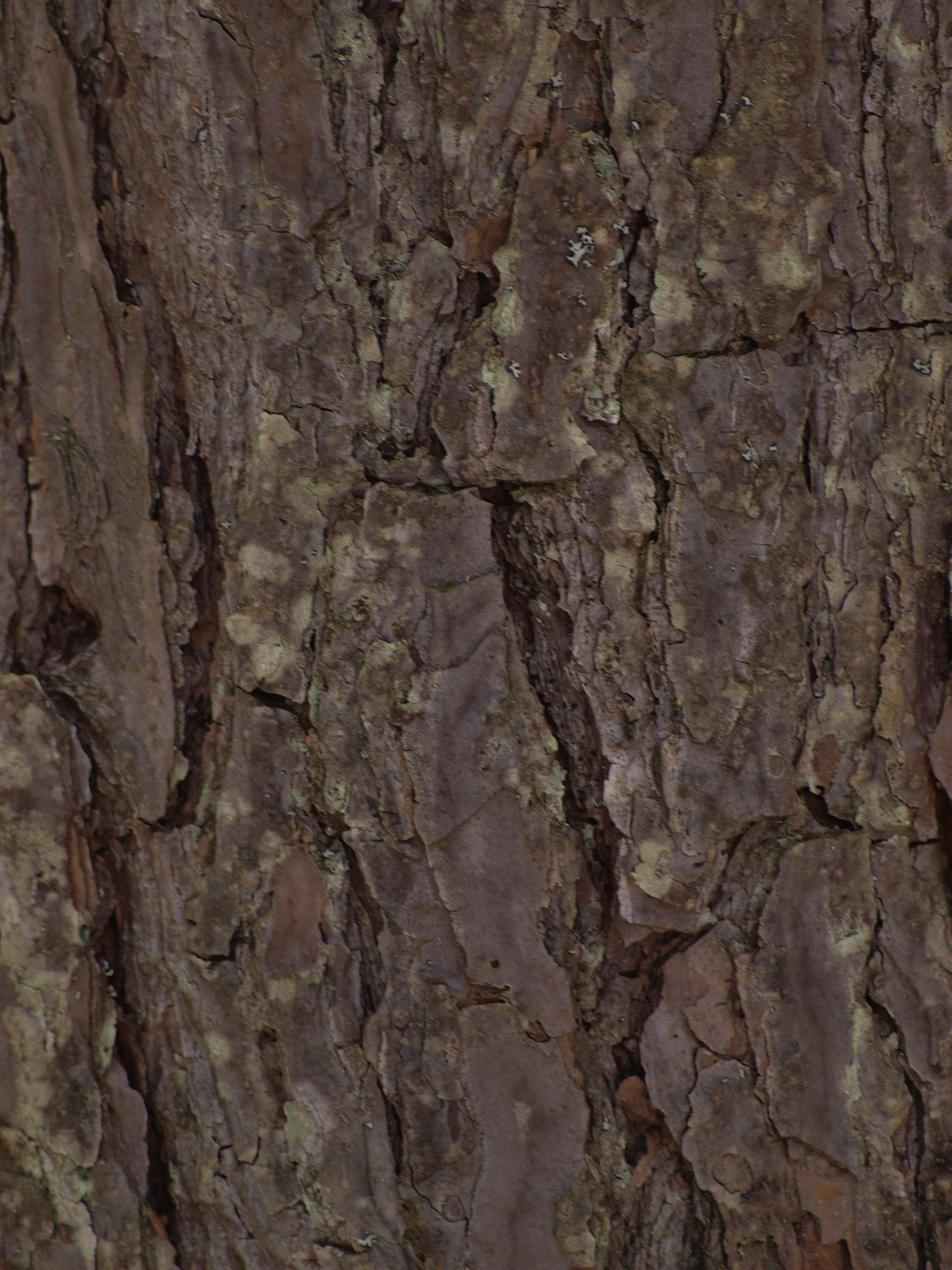Wood Texture Non-Commercial | HQ Photo Wood Texture